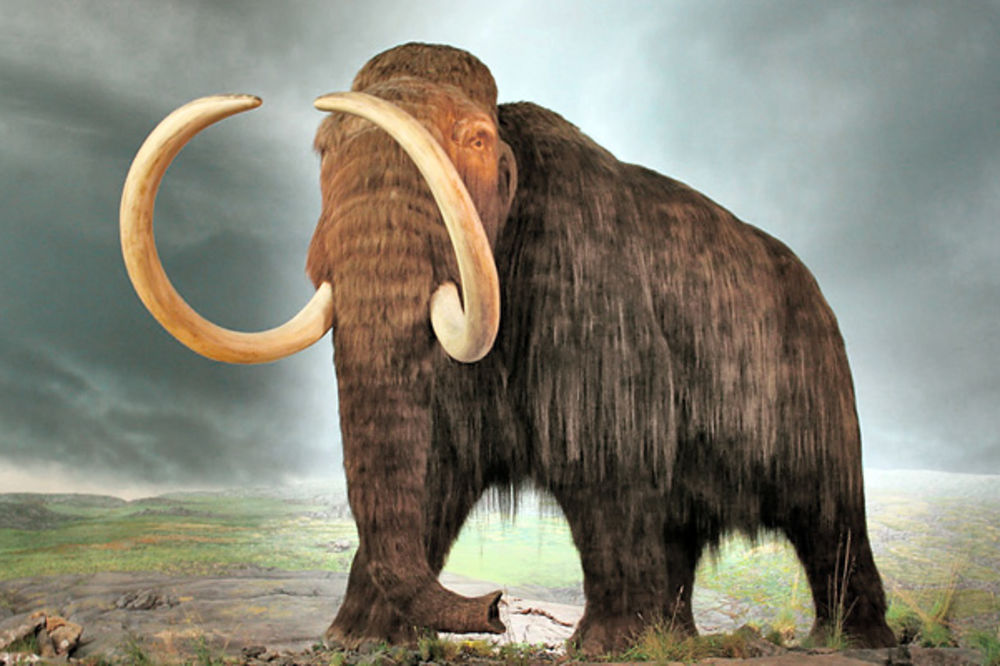How to Manage a Mammoth Task – See it as an Elephant